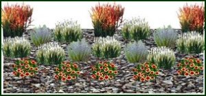 dwarf ornamental grass design