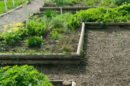 herb garden for example - Herb Garden Design Examples