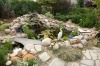landscaping a pond with rock