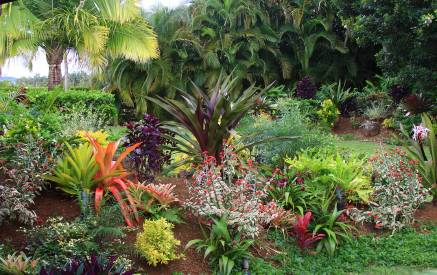 When you think of a tropical landscape what comes to mind lush