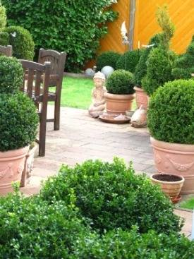 Boxwood Shrubs Planting Care Of Boxwood Plants Boxwood Varieties