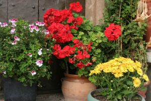 flower gardening in container