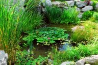 ideas for landscaping a pond