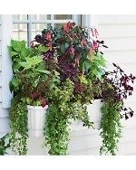 window box self watering planter
