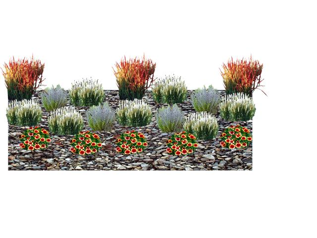 Dwarf ornamental grass 3d design for Using grasses in garden design